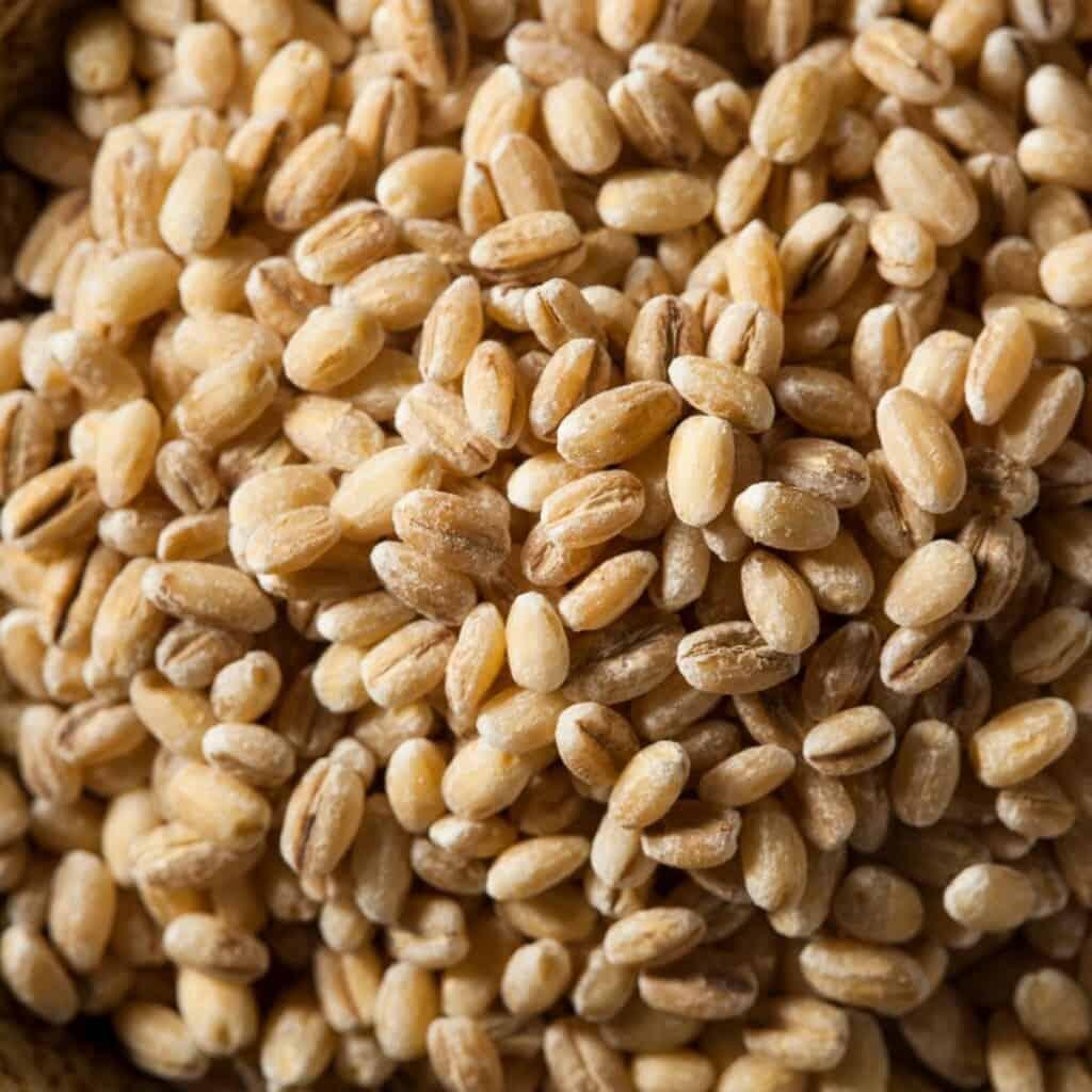 barley grains close up