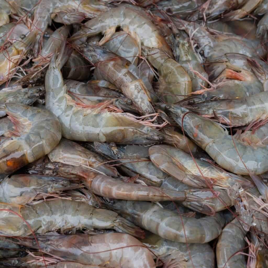 bowl of raw grey shrimp