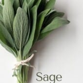 sage leaves tied with string